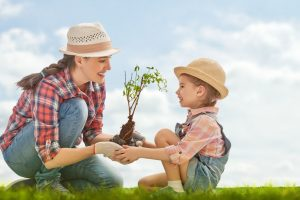 call utility locator services before you dig when planting trees