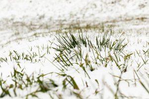 winter lawncare