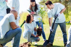 call before you dig in Fort Collins before planting a tree