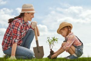 call before you dig in Denver before planting a tree
